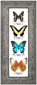 Набор из 4-х бабочек, 27*64 см, 180026