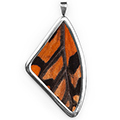 Кулон, Papilio antimachus, 51 мм