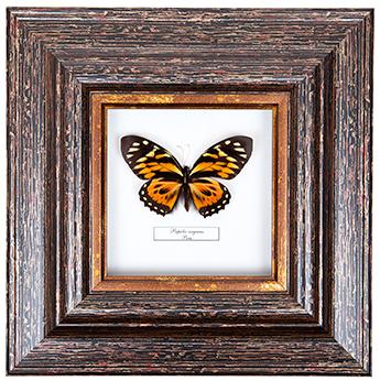 Papilio zagreus, 30*30 см, 180015