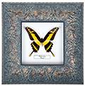 Papilio thoas, 27*27 см, 18004